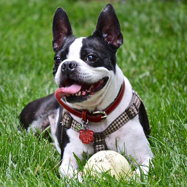 happy_dog_14591980751