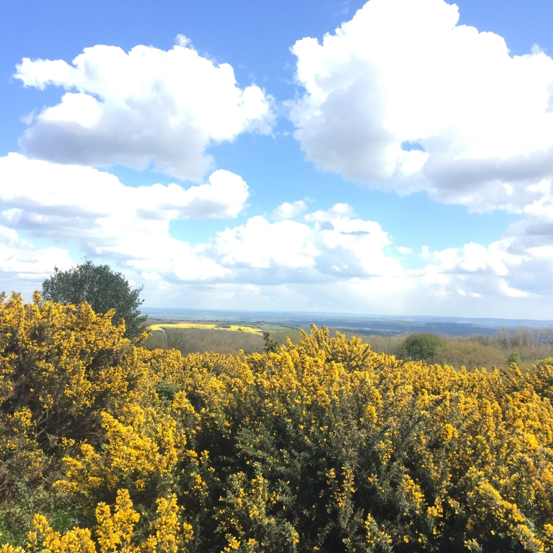 Cothelstone Hill