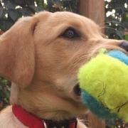 Puppy visit dog walker bridgwater